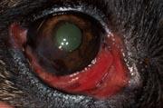 Cas clinique n°1 oeil droit