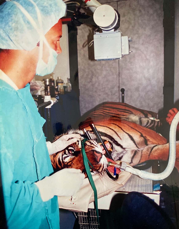 operation-tigre